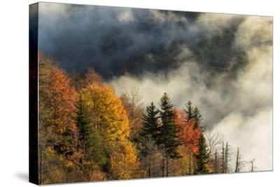 Autumn Colors and Mist at Sunrise, North Carolina-Adam Jones-Stretched Canvas Print