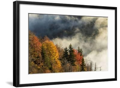 Autumn Colors and Mist at Sunrise, North Carolina-Adam Jones-Framed Photographic Print