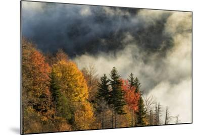 Autumn Colors and Mist at Sunrise, North Carolina-Adam Jones-Mounted Photographic Print