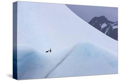 South Georgia Island. Chinstrap Penguins Ride an Iceberg as it Floats by Mountain-Jaynes Gallery-Stretched Canvas Print