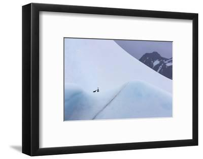South Georgia Island. Chinstrap Penguins Ride an Iceberg as it Floats by Mountain-Jaynes Gallery-Framed Photographic Print