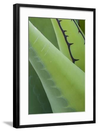 Mexico, Baja California. Abstract Line Detail Agave in Baja California, Mexico-Judith Zimmerman-Framed Photographic Print