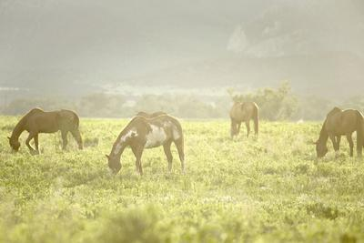 Philmont Scout Ranch Horses at Pasture before Sunset. Cimarron, New Mexico-Maresa Pryor-Framed Photographic Print