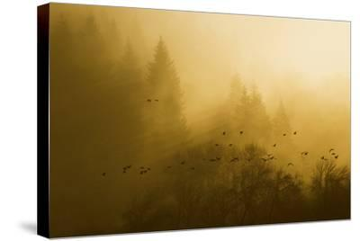 Canada Geese, Foggy Morning Flight-Ken Archer-Stretched Canvas Print