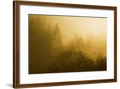 Canada Geese, Foggy Morning Flight-Ken Archer-Framed Photographic Print
