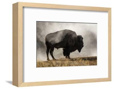 Bison in Mist, Upper Geyser Basin Near Old Faithful, Yellowstone National Park, Wyoming-Adam Jones-Framed Photographic Print