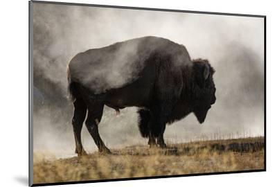 Bison in Mist, Upper Geyser Basin Near Old Faithful, Yellowstone National Park, Wyoming-Adam Jones-Mounted Photographic Print