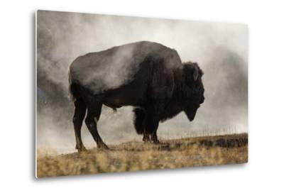 Bison in Mist, Upper Geyser Basin Near Old Faithful, Yellowstone National Park, Wyoming-Adam Jones-Metal Print