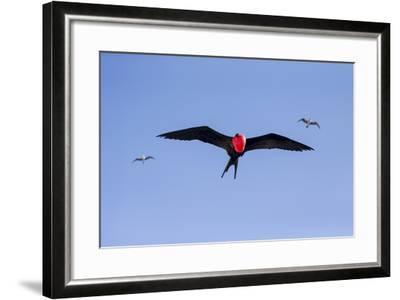 Ecuador, Galapagos Islands, Genovesa, Darwin Bay Beach-Ellen Goff-Framed Photographic Print