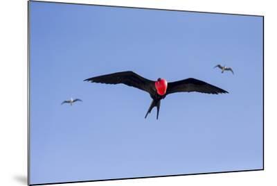 Ecuador, Galapagos Islands, Genovesa, Darwin Bay Beach-Ellen Goff-Mounted Photographic Print