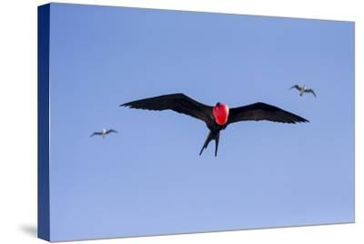 Ecuador, Galapagos Islands, Genovesa, Darwin Bay Beach-Ellen Goff-Stretched Canvas Print