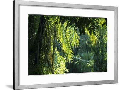 Indonesia, Sulawesi. Rain Pours Between Verdant Palm Fronds Giving Life to the Rainforest-David Slater-Framed Photographic Print