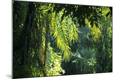 Indonesia, Sulawesi. Rain Pours Between Verdant Palm Fronds Giving Life to the Rainforest-David Slater-Mounted Photographic Print