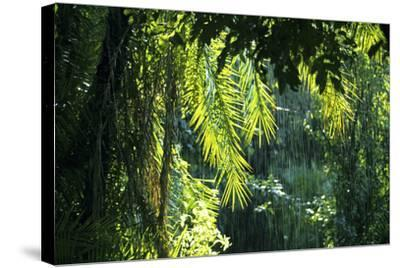 Indonesia, Sulawesi. Rain Pours Between Verdant Palm Fronds Giving Life to the Rainforest-David Slater-Stretched Canvas Print