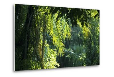 Indonesia, Sulawesi. Rain Pours Between Verdant Palm Fronds Giving Life to the Rainforest-David Slater-Metal Print