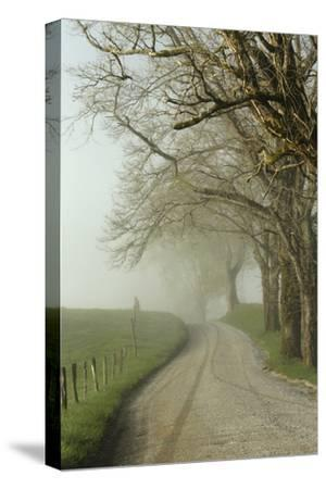 Early Morning View of Sparks Lane, Cades Cove, Great Smoky Mountains National Park, Tennessee-Adam Jones-Stretched Canvas Print
