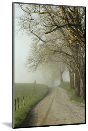 Early Morning View of Sparks Lane, Cades Cove, Great Smoky Mountains National Park, Tennessee-Adam Jones-Mounted Photographic Print