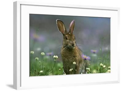Snowshoe Hare, Ontario, Canada-Tim Fitzharris-Framed Photographic Print