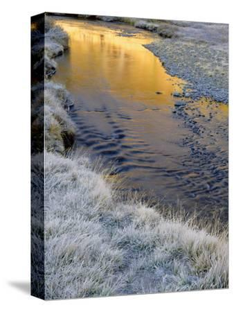 California, Inyo National Forest-John Barger-Stretched Canvas Print