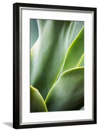 Hawaii, Maui, Agave Plant with Fresh Green Leaves-Terry Eggers-Framed Photographic Print
