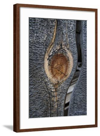 California, Bodie State Park. Weathered Tree Knot-Jaynes Gallery-Framed Photographic Print