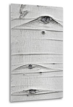 Utah, Fishlake National Forest. Detail of Aspen Tree Trunk-Jaynes Gallery-Metal Print