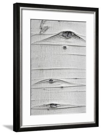 Utah, Fishlake National Forest. Detail of Aspen Tree Trunk-Jaynes Gallery-Framed Photographic Print