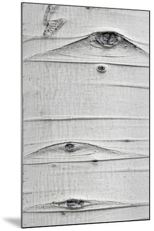 Utah, Fishlake National Forest. Detail of Aspen Tree Trunk-Jaynes Gallery-Mounted Photographic Print
