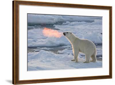 Norway, Svalbard, Spitsbergen. Polar Bear with Backlit Breath-Jaynes Gallery-Framed Photographic Print