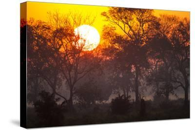 Brazil, Mato Grosso, the Pantanal, Pouso Alegre. Sunset Through Ipe Trees-Ellen Goff-Stretched Canvas Print