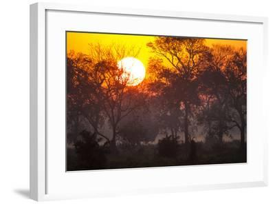Brazil, Mato Grosso, the Pantanal, Pouso Alegre. Sunset Through Ipe Trees-Ellen Goff-Framed Photographic Print