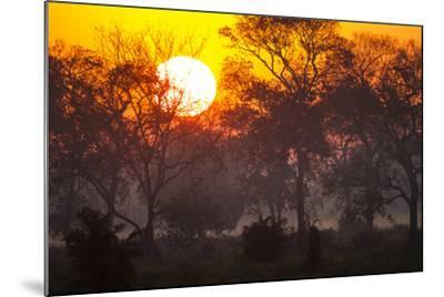 Brazil, Mato Grosso, the Pantanal, Pouso Alegre. Sunset Through Ipe Trees-Ellen Goff-Mounted Photographic Print