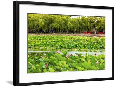 Pink Lotus Pads Garden Summer Palace, Beijing, China-William Perry-Framed Photographic Print