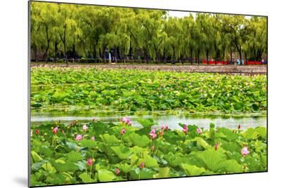 Pink Lotus Pads Garden Summer Palace, Beijing, China-William Perry-Mounted Photographic Print