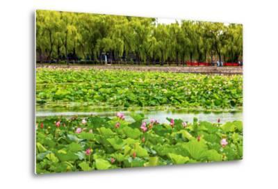 Pink Lotus Pads Garden Summer Palace, Beijing, China-William Perry-Metal Print