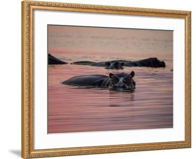 Africa, Zambia. Hippos in River at Sunset-Jaynes Gallery-Framed Photographic Print