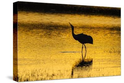 New Mexico, Bosque Del Apache National Wildlife Refuge. Sandhill Crane at Sunset-Jaynes Gallery-Stretched Canvas Print