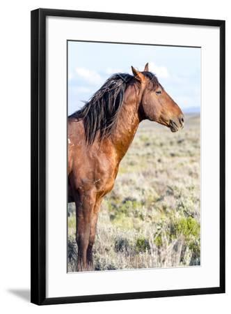 Colorado, Sand Wash Basin. Profile of Wild Stallion-Jaynes Gallery-Framed Photographic Print