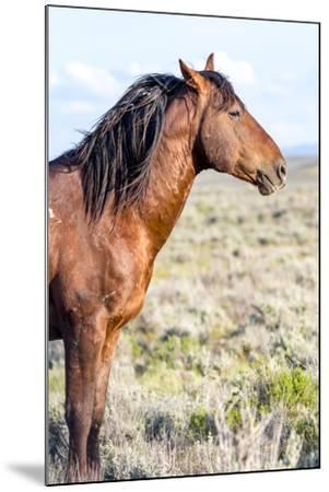 Colorado, Sand Wash Basin. Profile of Wild Stallion-Jaynes Gallery-Mounted Photographic Print