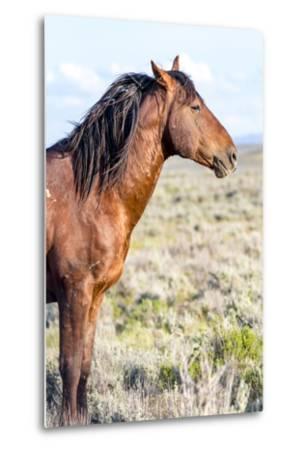 Colorado, Sand Wash Basin. Profile of Wild Stallion-Jaynes Gallery-Metal Print