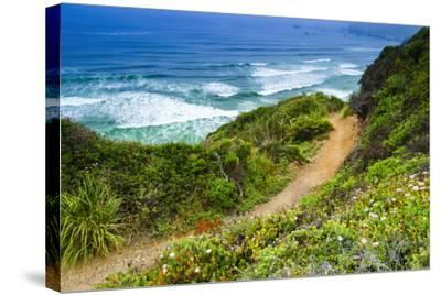 The Trail to Sand Dollar Beach, Los Padres National Forest, Big Sur, California, Usa-Russ Bishop-Stretched Canvas Print