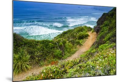 The Trail to Sand Dollar Beach, Los Padres National Forest, Big Sur, California, Usa-Russ Bishop-Mounted Photographic Print