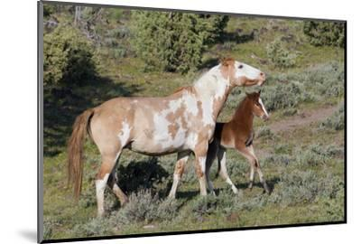 Wild Horses, Mare with Colt-Ken Archer-Mounted Photographic Print