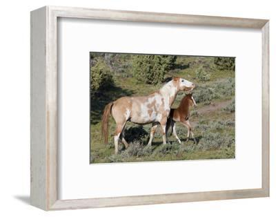 Wild Horses, Mare with Colt-Ken Archer-Framed Photographic Print
