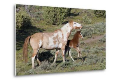 Wild Horses, Mare with Colt-Ken Archer-Metal Print