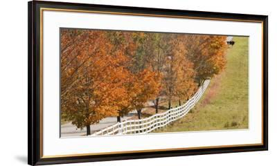 Maine, Pownal. Fenceline and Cow-Jaynes Gallery-Framed Premium Photographic Print