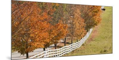 Maine, Pownal. Fenceline and Cow-Jaynes Gallery-Mounted Premium Photographic Print