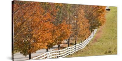 Maine, Pownal. Fenceline and Cow-Jaynes Gallery-Stretched Canvas Print