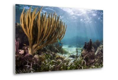 Sunlight Illuminates Soft and Hard Corals and Blue and Clear Waters, Cuba-James White-Metal Print