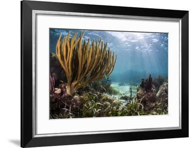 Sunlight Illuminates Soft and Hard Corals and Blue and Clear Waters, Cuba-James White-Framed Photographic Print